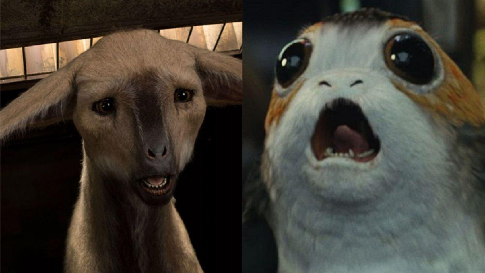 Les sons des Porgs et des Fathiers dans Les Derniers Jedi